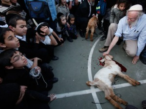 Ultra orthodox children gather as members of the Temple Institute perform a Jewish ritual, the slaughter of a one-year-old flawless lamb. (AFP Photo / Gali Tibbon)