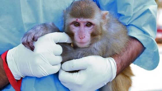 In this photo, the monkey that was sent into space by Iran on January 27 and was returned safely can be seen after returning to the Earth. (File photo)